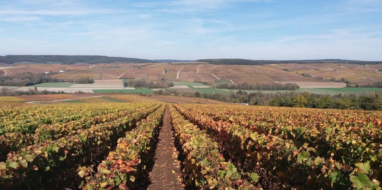Champagne trip, dag 2 Côte des Blancs
